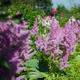 Цветы уусадьбы Гальских