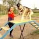 Специализированная собачья площадка