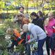 Посадка цветов вдетском саду №98