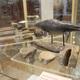 Выставка «Властелины мезозойских морей»