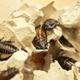 Тараканы втехнопарке