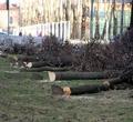 ВЧереповце наЛенина из-за реконструкции сетей спилят 40 деревьев