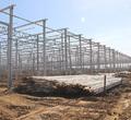 Тепличный комплекс наКирилловском шоссе соберет первый урожай вконце этого года