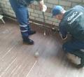 Череповчане засезон 15 раз вызывали спасателей из-за осиных гнезд