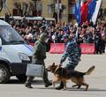 Череповчанам покажут служебных собак, боевую технику изадержание преступника