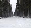 Верховный суд отклонил апелляционные жалобы защитников Пуловского леса