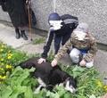 ВЧереповце полиция начала расследование из-за смерти дворового пса