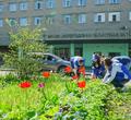 ВЧереповце убольниц иполиклиник посадят пять тысяч цветов