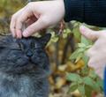 ВЧереповце разрабатывают план поспасению бездомных кошек