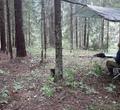 Череповецкие археологи раскопали средневековые поселения вБелозерском иБабаевском районах