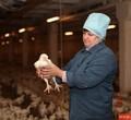 Нашекснинской птицефабрике начались задержки зарплат