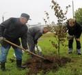 ВЧереповце всквере чернобыльцев высадили 100 деревьев икустарников