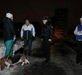 ВЗашекснинском районе полиция ловила собачников у32-й школы