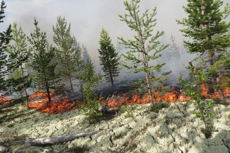 Лесной пожар в Мурманске