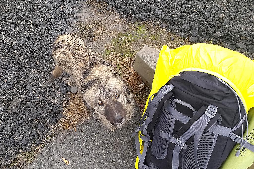 Трасса на Пятигорск. Одинокий пёс очень хотел кушать, но еды у меня не было. Я стоял и разговаривал с ним, а полицейские в стороне косо смотрели на нас.